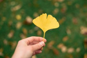 woman-holding-gingko-tree-leaf